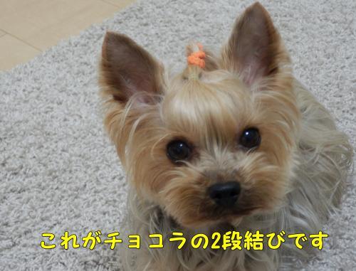 P1140216_convert_20120114234100.jpg