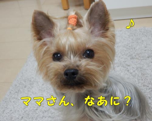 P1170021_convert_20120117223237.jpg