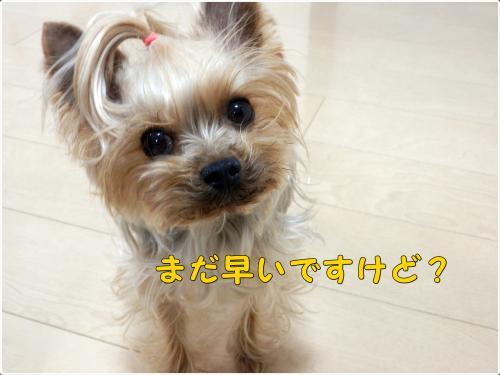 P1250046_convert_20120125214219.jpg