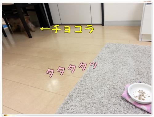 P1270208_convert_20120127224358.jpg