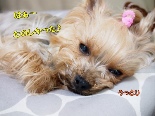P2232431_convert_20120224221936.jpg