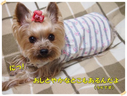 P3043522_convert_20120306232532.jpg