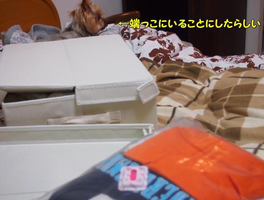 P3245157_convert_20120324225428.jpg