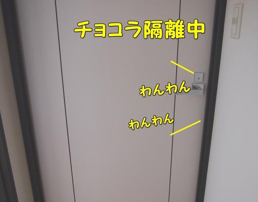 P3275392_convert_20120328204328.jpg