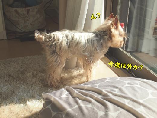 P3275419_convert_20120328213052.jpg