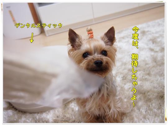 P4036011_convert_20120405222950.jpg