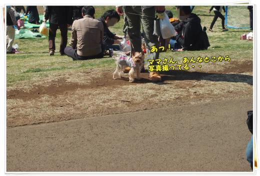 P4086488_convert_20120409001937.jpg