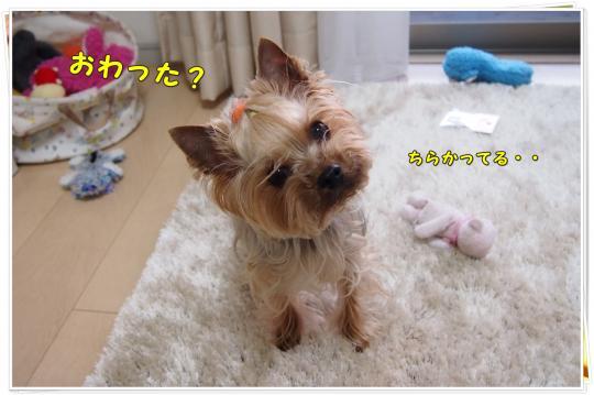 P4086669_convert_20120409223122.jpg