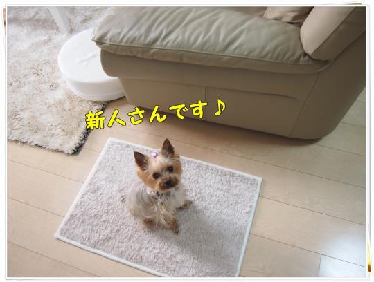 P4106699_convert_20120411205312.jpg