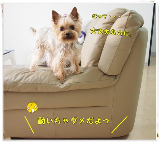 P4106706_convert_20120411213147.jpg
