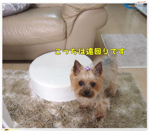 P4106713_convert_20120411212058.jpg