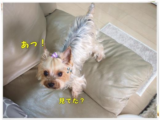 P4106724_convert_20120411211232.jpg