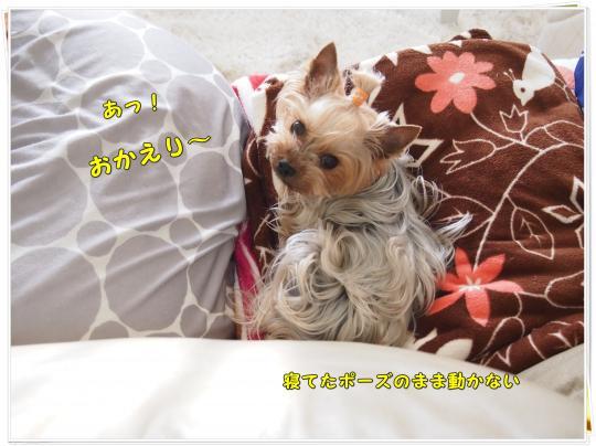 P4126927_convert_20120413220844.jpg