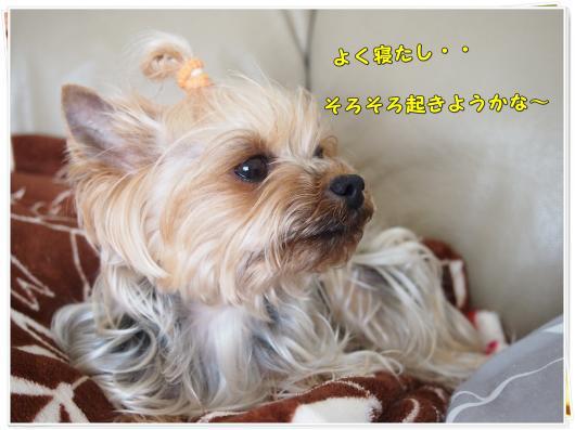 P4126942_convert_20120413225746.jpg