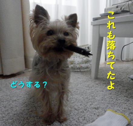 PC250046_convert_20111228221131.jpg