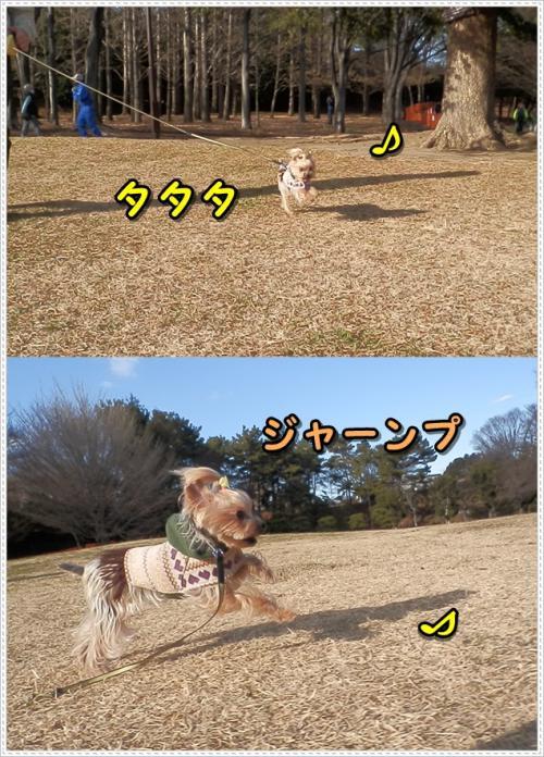 cats_convert_20120108221816.jpg