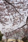 2012年4月12日・ドクターイエロー(1)