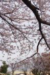 2012年4月12日・ドクターイエロー(2)