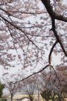 2012年4月12日・ドクターイエロー(3)