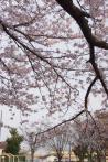 2012年4月12日・ドクターイエロー(4)