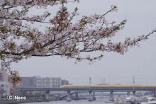 4月16日・ドクターイエロー(3)