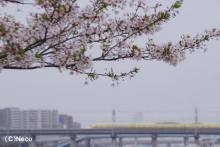 4月16日・ドクターイエロー(4)
