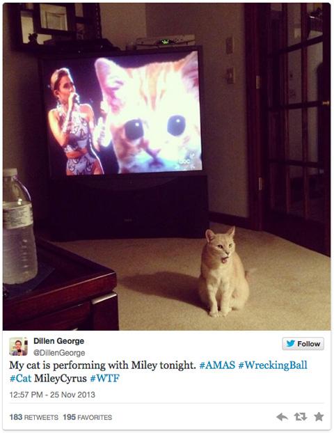 MileyCyrus_cat2