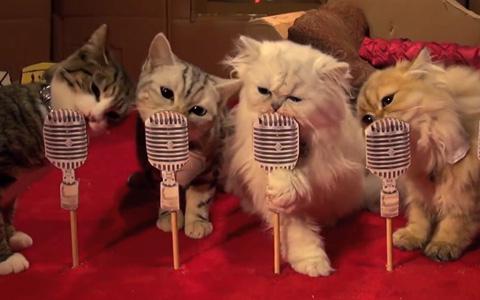 Poopy-Cat-Dolls0