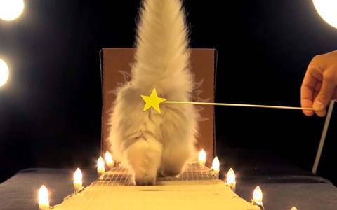 Poopy-Cat-Dolls3