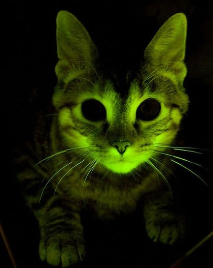 GlowingCat1
