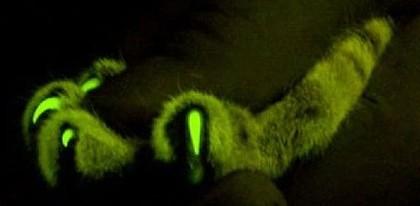 GlowingCat2