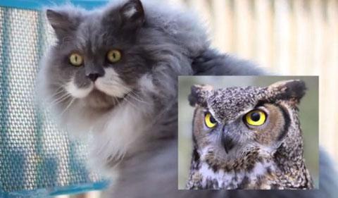 owlbert.