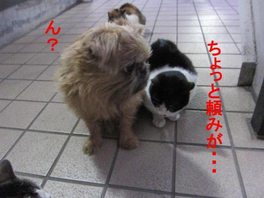 02_convert_20120212104907.jpg