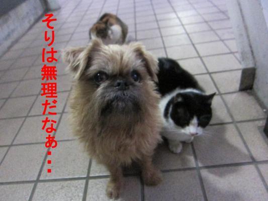 03_convert_20120212104923.jpg
