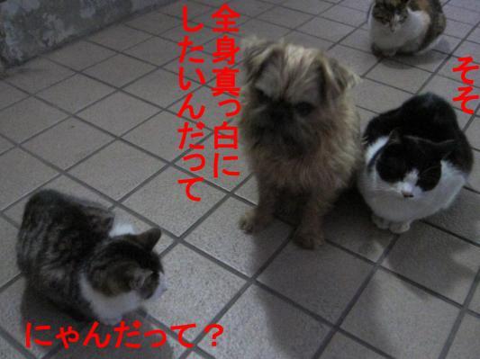 04_convert_20120212104939.jpg
