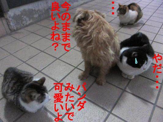 05_convert_20120212104953.jpg
