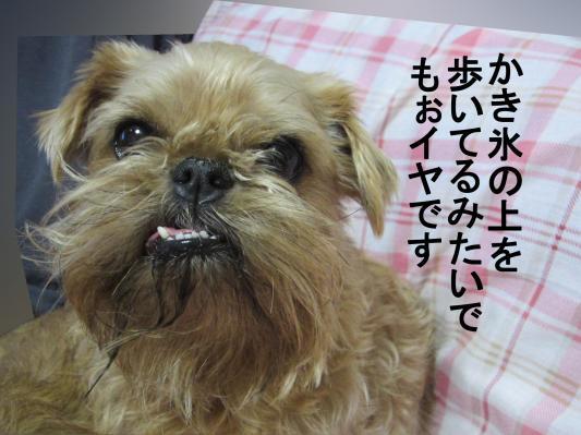 10_convert_20120124071522.jpg