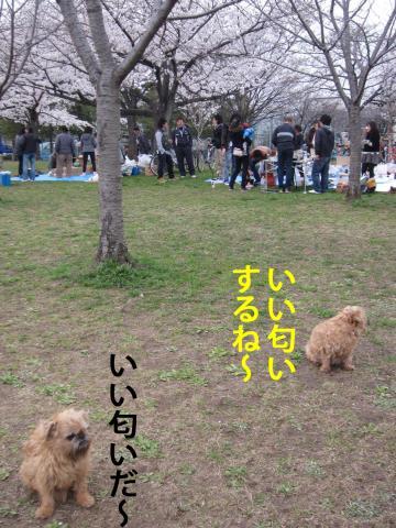 1_convert_20120410072049.jpg