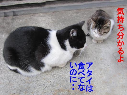 2-0_convert_20111208052846.jpg
