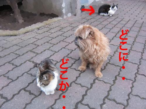 2-0_convert_20120306080015.jpg