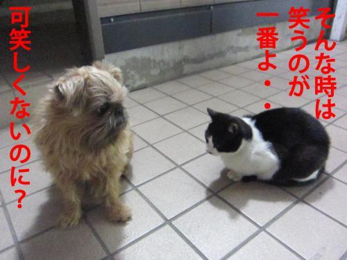 縺ォ_convert_20120310085030