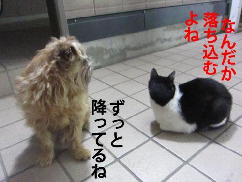 縺ッ_convert_20120310085001