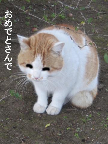 20_convert_20120101065839.jpg