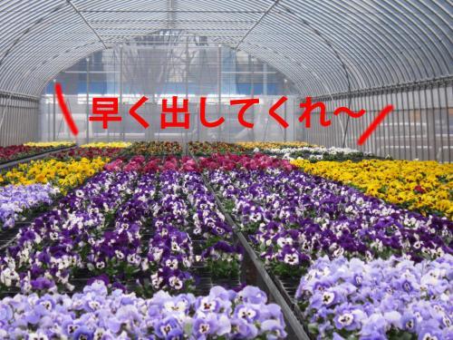 20_convert_20120322090312.jpg