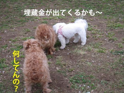 20_convert_20120420093859.jpg