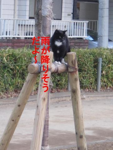 2_convert_20120122080603.jpg