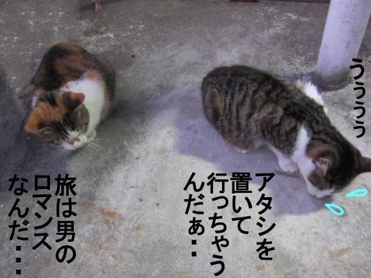 2_convert_20120201083809.jpg