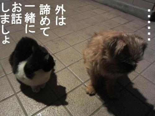 2_convert_20120303093906.jpg