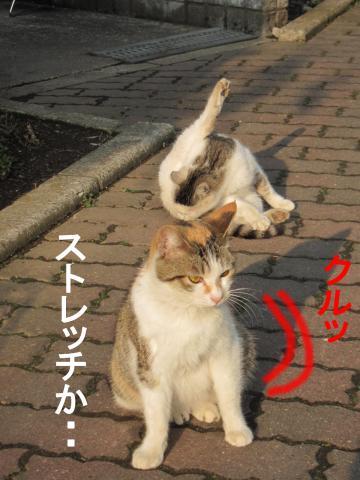 2_convert_20120304083043.jpg