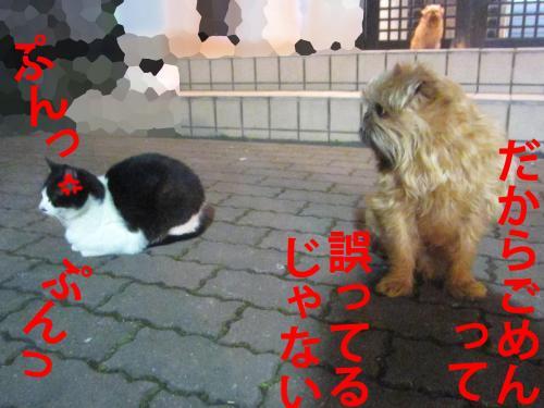 2_convert_20120308082736.jpg